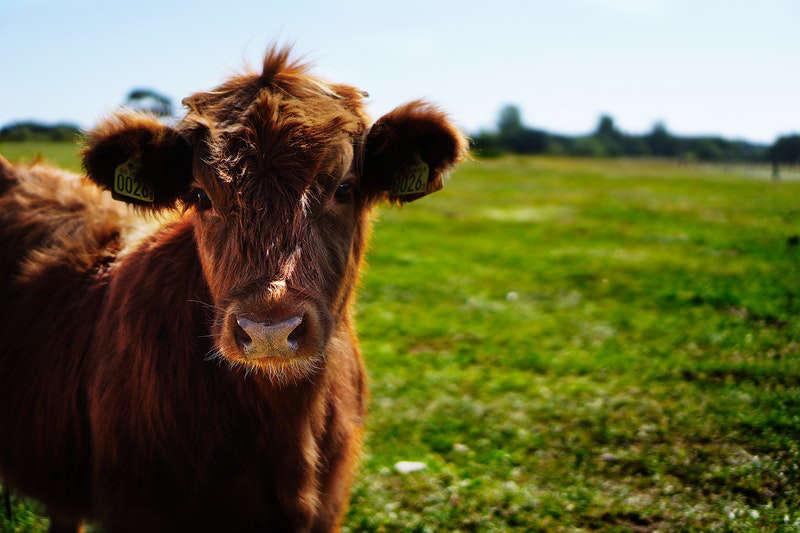 Livestock & Bloodstock Insurance
